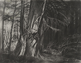 1993<br />Graphite on paper<br />70.5 x 91.4 cm<br />Collection of the Artist<br />The forest drawings created by Tanabe during the 1990s illustrate the artist's remarkable awareness of light and the influence it has to conceal and reveal a subject. Cedar II demonstrates the denseness and intricacies of forms that are present within a West Coast forest. The contrast between light and dark is heightened with the subtle use of colour to reveal the lushness of the scene, as if it were emerging from an achromatic state.